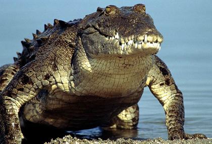 hunk-croc1