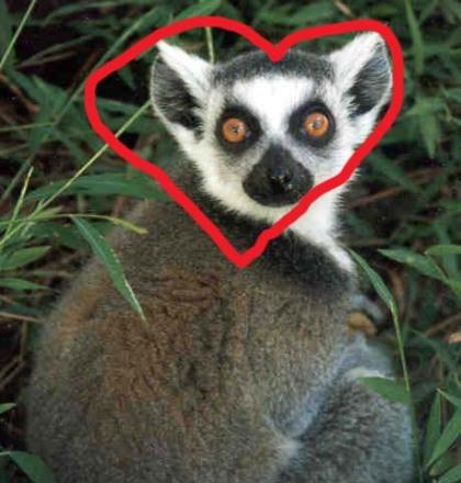 lemur-love