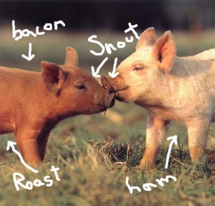 yummy pigs