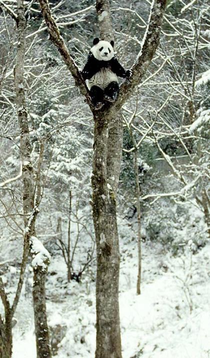drunk-panda