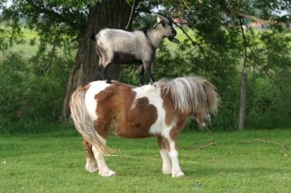 horse-trick