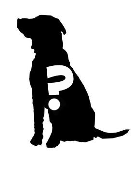 dog_blind